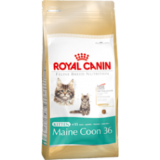 ROYAL CANIN Growth Kitten Main Coon 4 kg