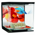Designer Marina Aquarium for Betta Fish + Betta Fish
