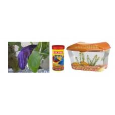 Terrarium 18cm + Betta Fish + Plant + Gravel + Food