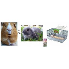 Rabbits and Guinea Pigs Cage - Cavia 80 + Rabbit + Litter wood pellets + Food